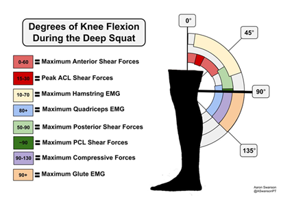 This shows the correct 135 degree knee flexion during a deep squat