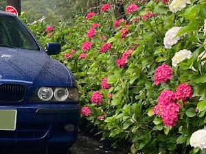 5シリーズ セダン  E39 Mスポーツリミテッドのカスタム事例画像 ドラさんの2021年06月16日19:21の投稿