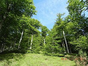 Photo: La forêt d'Iraty est la plus grande hêtraie d'Europe (17 300 hectares), dont la majeure partie se situe en territoire espagnol. Au fond de la vallée coule la rivière Iraty qui se dirige vers l'Espagne toute proche de là