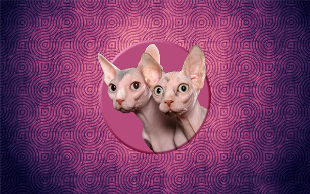 cat Canadian Hairless Themes & New Tab