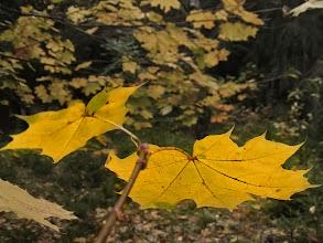 Photo: Po rudens lygiadienio sparčiai trumpėja dienos...