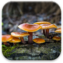 Mushrooms Live Wallpaper icon