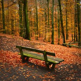 by Anngunn Dårflot - City,  Street & Park  City Parks