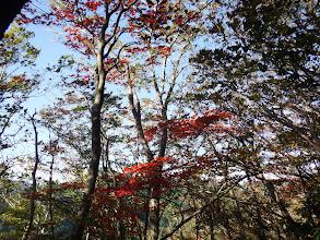 紅葉が綺麗に