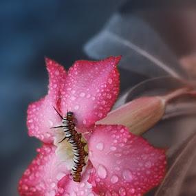 by Monica Anantyowati - Nature Up Close Flowers - 2011-2013