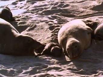 Season of the Seals