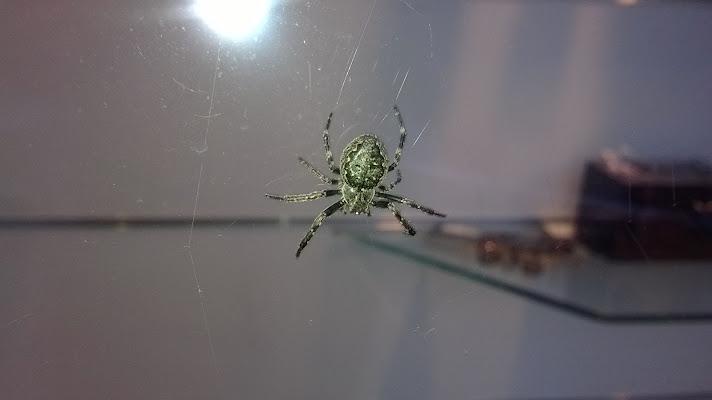 Ragno solitario di A.Monte