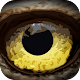 Hidden Animals : Photo Hunt . Find Objects Game (game)