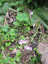 Photo: Nog wat bloemetjes als toegift