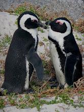 Photo: Pinguin-Dialog