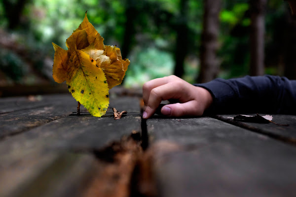Malimconia d'autunno di faranfaluca