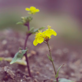 by Indra Fardhani - Nature Up Close Other plants