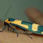 Litchen Moth