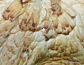 Photo: Fugus art. Rooster Rock burn.