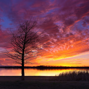 Winter Sunset by Roger Armstrong - Landscapes Sunsets & Sunrises ( water, clouds, sunset, texas, lakes, trees )