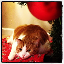 Photo: Waiting for Christmas under the tree! #intercer #cat #pet #cats #pets #christmas #tree #eyes #meow #beautiful #cute #cutie #animal #sweet #kitty #kitten #catlovers #love #pretty #funny #fur #catsofinstagram #paw #love #ornaments #silence - via Instagram, http://instagr.am/p/Tmp3a-pfqm/