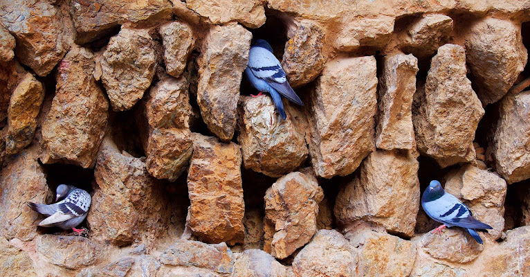 Urban Pigeons di MersaPhotography