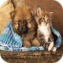 Cat & Dog Puzzle Memory Game icon