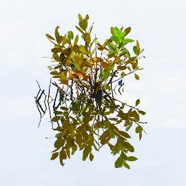 Water mirror by Cory Bohnenkamp - Nature Up Close Trees & Bushes ( water, reflection, nature, hi tone, bush, leaves )