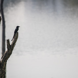 Bird on a branch at Kaikondrahalli Lake  by Amitabh Mendiratta - Novices Only Landscapes