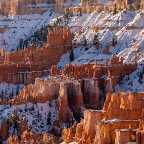 by Ruben Parra - Landscapes Caves & Formations ( cliff, white, sandstone, glow, landscape, national park, winter, rock formations, utah, snow, hoodoos, sunrise, rocks, bryce canyon,  )