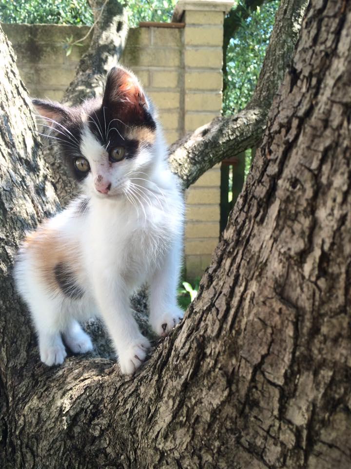 Piccola Yzma sull'albero  di AriannaP