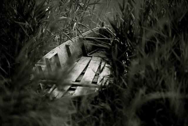 barca nel canneto di Ltz/rivadestra