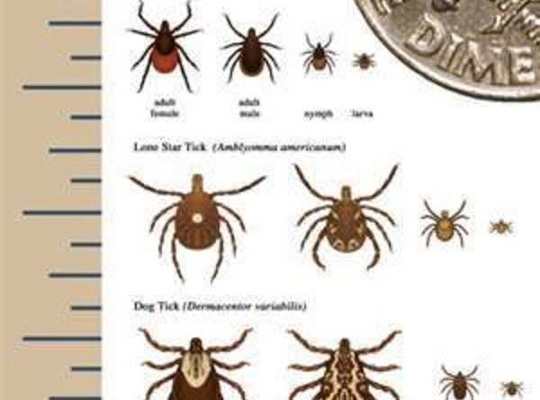 Tickicide - The Art Of Getting Rid Of Ticks In Lawns Recipe