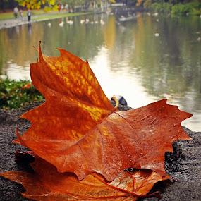 by Oona Tully - City,  Street & Park  Vistas ( nature, park, autumn, leaf )