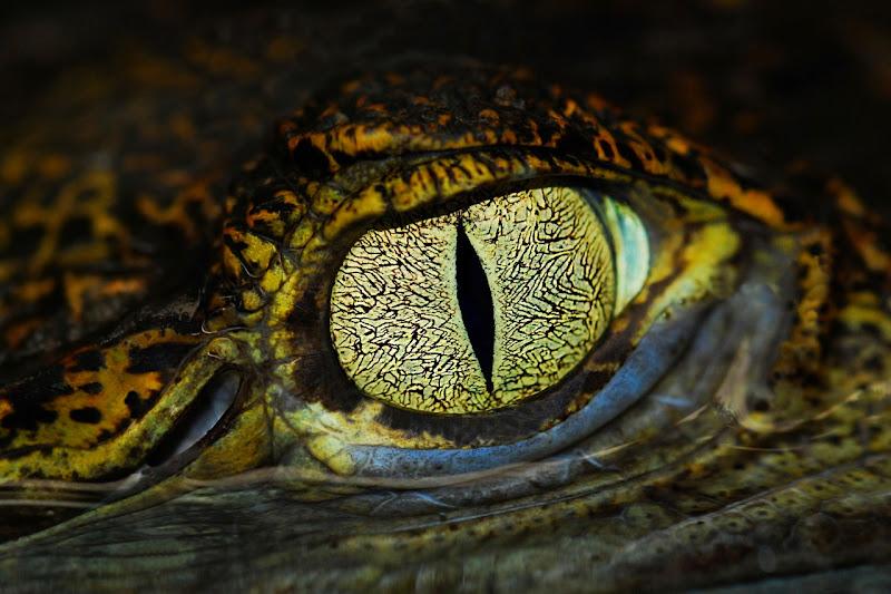 L'occhio del caimano di BASTET-Clara