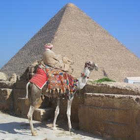 Piramids by Mylene Rizzo - Buildings & Architecture Public & Historical ( egypt, camel, piramids, desert, people )