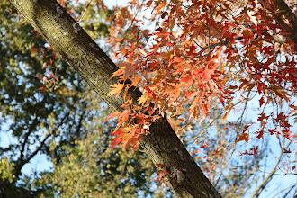 Photo: Maple