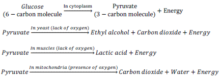 reaction in respiration1