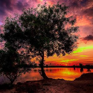 tree ok.jpg