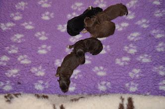 Photo: Der blev skiftet tæpper i kassen og hvalpene flyttet i kassen.