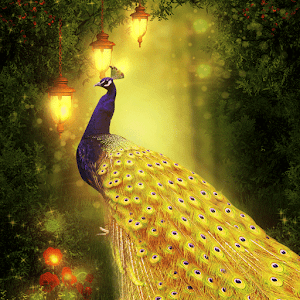 Golden Peacock Queen