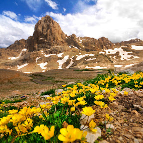 Panorama Aladag by Mustafa Tor - Landscapes Mountains & Hills ( mountains, peak, flowers, landscape, panoramic )