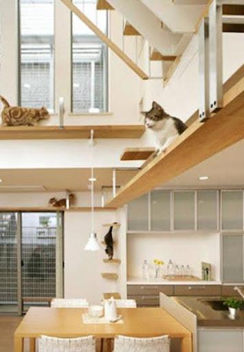 猫之家设计