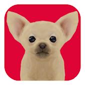 かわいい子犬ソリティア(チワワ)無料ペット育成トランプゲーム