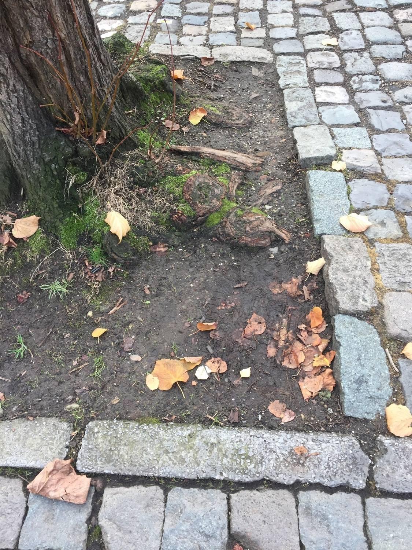 Bomen op een parkeerplaats hebben erg te lijden onder het gewicht van de auto's, waardoor de grond verdicht geraakt.
