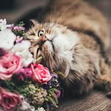 Wedding photographer Elena Kosmatova (kosmatova). Photo of 24.10.2018