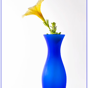 Blue and yellow by Chris Duffy - Artistic Objects Still Life ( glass, blue, white, yellow, still life, vase, flower )