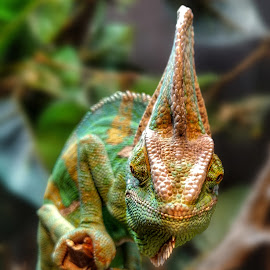 Marvin Smiles by Shawn Thomas - Animals Reptiles