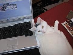 kitty 159