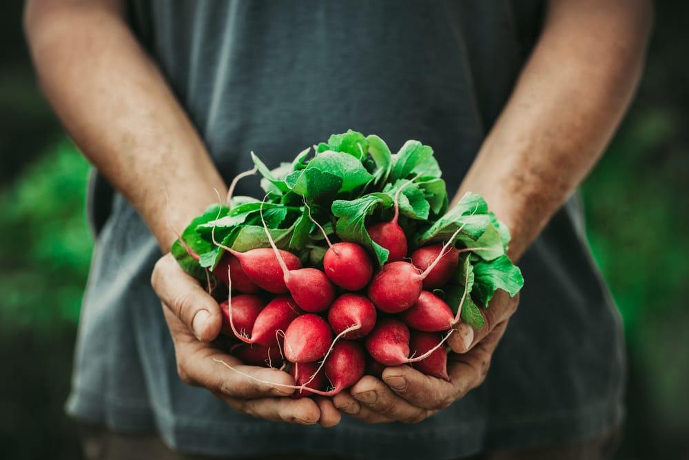 De effecten van het eten van biologische voeding