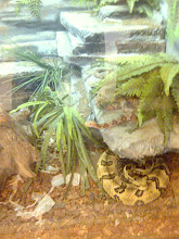 Photo: O'Bannon Woods SP - Nature Center, Copperhead & Timber Rattlesnake