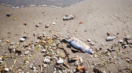 La suciedad se adueña de la playa de Costacabana