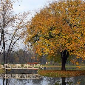 Skopje city park by Emil Chuchkov - City,  Street & Park  City Parks ( cuckove canon skopje park autumn )
