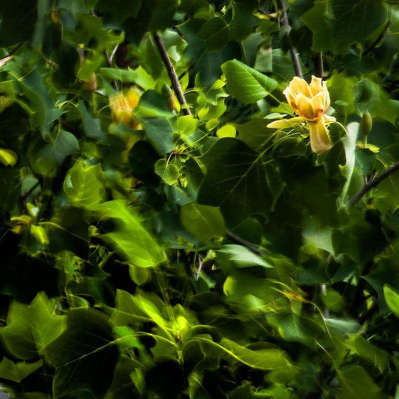 brezza sull'albero di bi