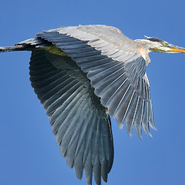 0 Bird 98862~ by Raphael RaCcoon - Animals Birds